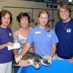 "This young Kemps Ridley turtle was nicknamed  ""Deb"" for Debordieu Beach, where she was found with a broken humerus bone in her flipper; an injury which benefited from the x-ray machine. (l to r) Mary Pringle, Barb Gobien, Kelly Thorvalson, and Barb Bergwerf."