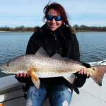 Redfish remain in massive schools numbering in the hundreds as they try to avoid dolphins and stay warm.