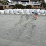 Mary Pringle measures turtle tracks that reveal a turtle climbed onto the beach to nest but was discouraged by the sand bags positioned on the beach at Wild Dunes to prevent erosion.