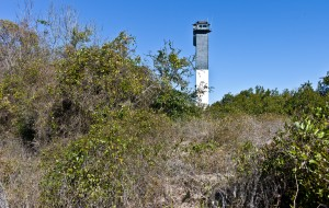 Sullivan's Island's maritime forest is the cause of much controversy amongst Island residents, some of whom want to see it substantially reduced, and others left as a natural landscape.  (Photo by Steve Rosamilia)