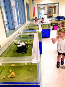 SIES's Coastal Ecology Lab touch tanks.