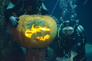 From pumpkin carving to SCUBA Claus, the Aquarium's great tank sees a lot of action during the holiday season.